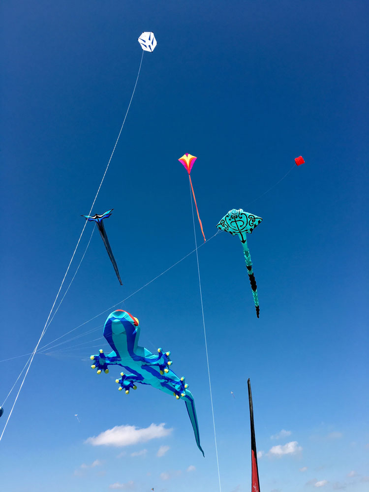 dub_kite_display1